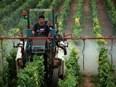 Semaine pour les alternatives aux pesticides : elles existent, informez-vous !