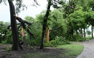 Vent ayant cassé des branches d'arbre