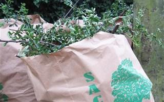 Déchets verts dans sac biodégradable