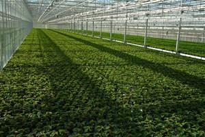Agriculture sous serre
