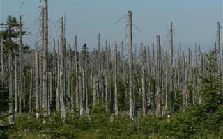 Forêt abimée par les pluies acides