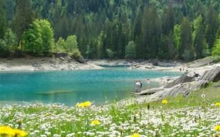 Lac et forêt de sapins