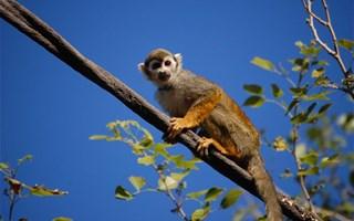 Petit singe perché dans un arbre