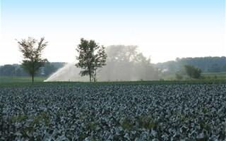 Irrigation des chmaps