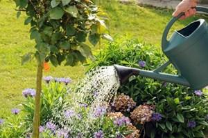J'arrose mon jardin le soir ou le matin
