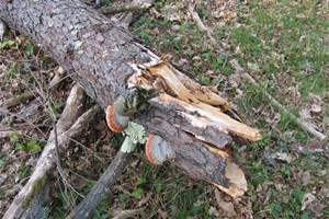 Je garde un arbre mort dans mon jardin