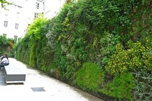 J'installe un mur végétalisé