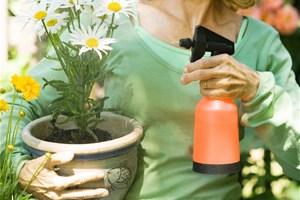 Dans le jardin, je protège mes fleurs et légumes avec du savon noir