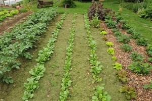 Je mets du paillage sur mon potager et mes plantes