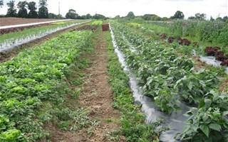 Agriculture biologique maraichage